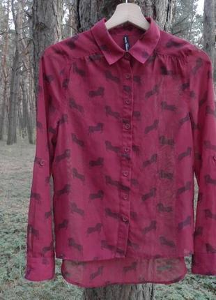 Блузка с лашадями