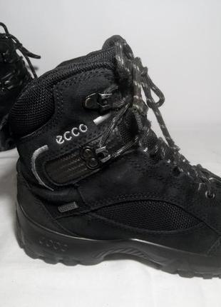 Зимние замшевые сапоги,ботинки,кроссовки ecco (эко)