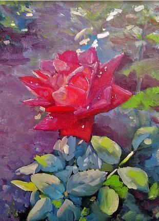 """Картина маслом цветы """"роза в вечерних лучах солнца"""""""