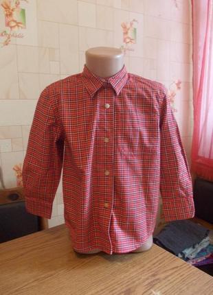 Рубашка 4 года, 104 см, adams, сост хор