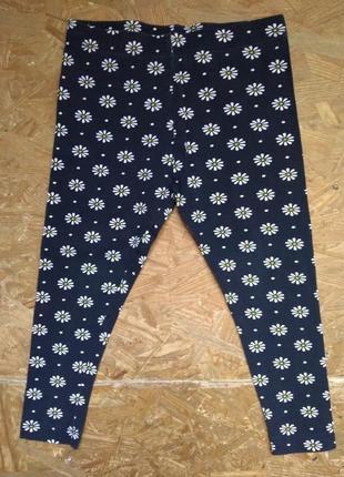 Штаны, лосины, ромашка, 95% cotton, young dimension