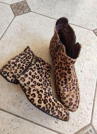 Ботинки леопардовые steve madden