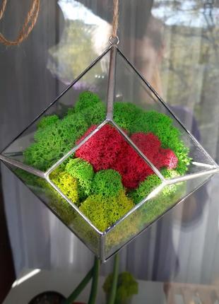Подвесной флорариум с мхом.