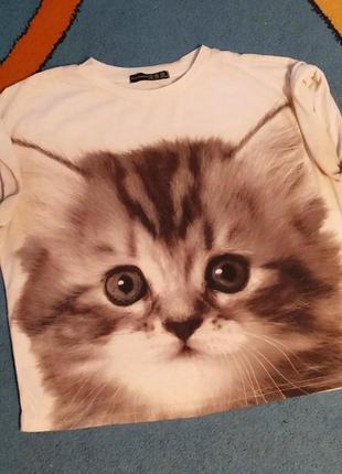 Футбоока принт котенок кіт кошка