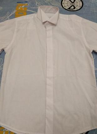 Рубашка под бабочку