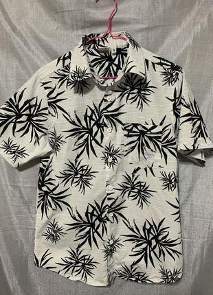 Мужская рубашка ocean pacific
