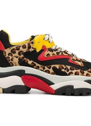 Кроссовки женские ash, леопард!