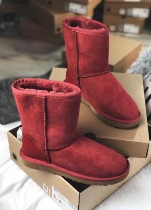 Распродажа! теплые зимние женские сапоги ugg в бордовом цвете /осень/зима/весна😍