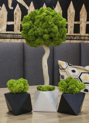 Дерево, ториарий из мха. эко-декор. набор