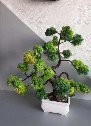 Декоративное дерево бонсай с стабилизированным мхом 30см