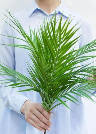 Пальма арека в пучке