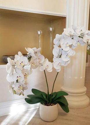 Орхидея-горшок