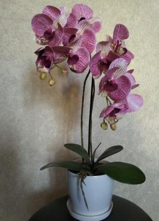 Орхидея латекс композиция в горшке