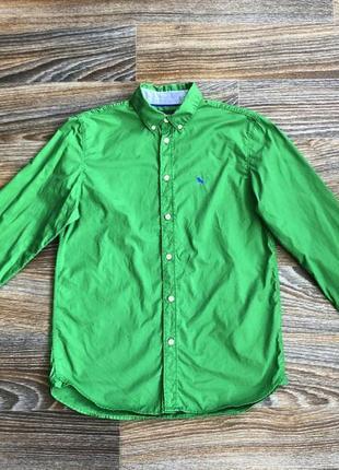 Зеленая хлопковая классическая рубашка рубашечка от h&m l.o.g.g.