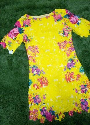 Солнечное платюшко