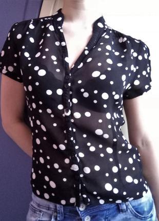 M&co блуза блузка рубашка шифон горох