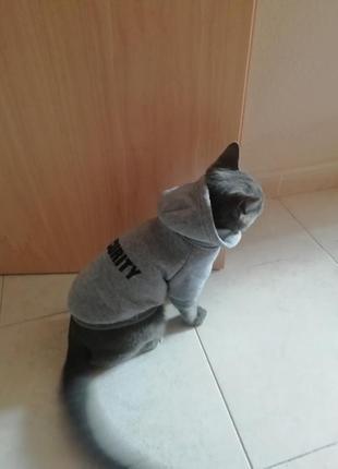 Кофта для кота с капюшоном