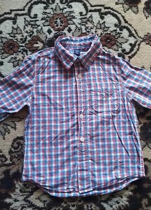Катонова рубашка від gap