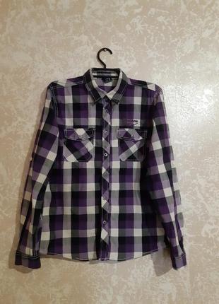 Сорочка рубашка dognose