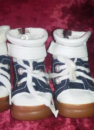 Светящиеся ботиночки на маленькую собачку.