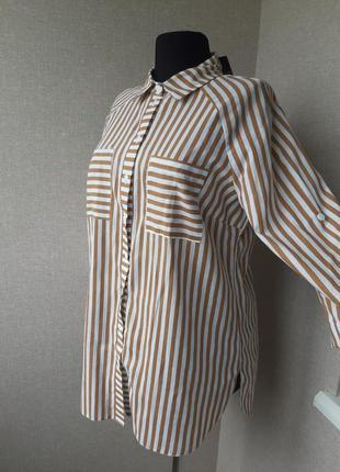 Хлопковая,коттоновая рубашка,блузка, блуза в полоску,большого размера,реглан, батал