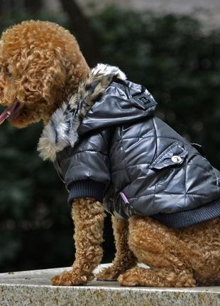 Теплая куртка petsoo на собачку  /1640/1 фото