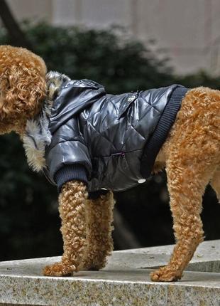 Теплая куртка petsoo на собачку  /1640/2 фото