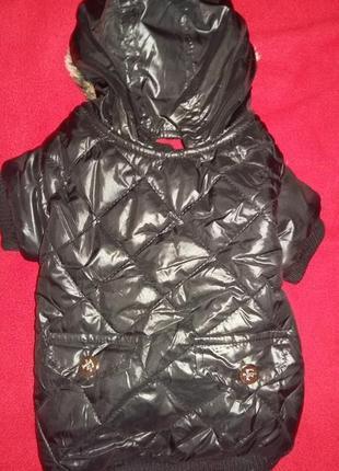 Теплая куртка petsoo на собачку  /1640/3 фото