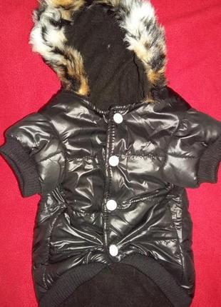 Теплая куртка petsoo на собачку  /1640/4 фото