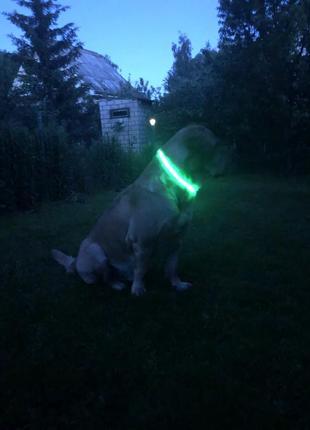 Светящийся ошейник для собак крупных пород