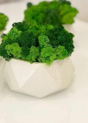 Кашпо із стабілізованим мохом3 фото