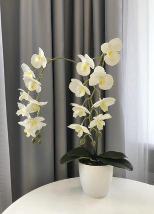 Орхидея для интерьера