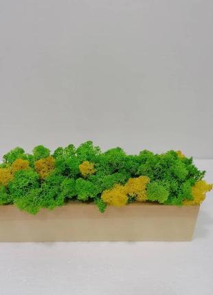 Дерев'яне кашпо зі стабілізованим мохом.