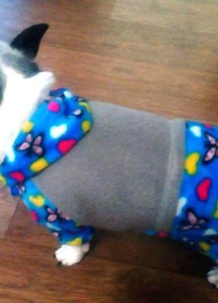 Велюровый комбинезон для маленькой собаки