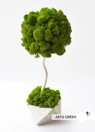 Дерево из стабилизированным мхом 30 см