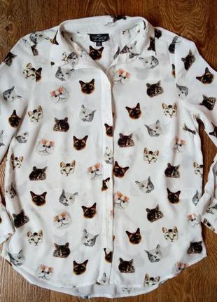 Рубашка с котиками
