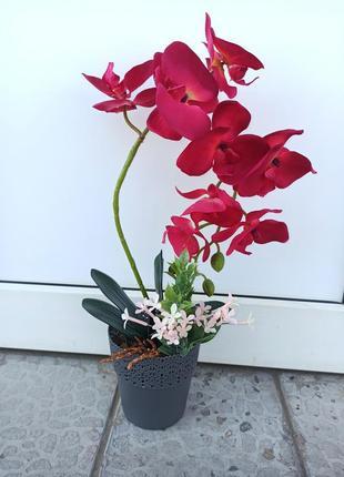 Орхідея в кашпо