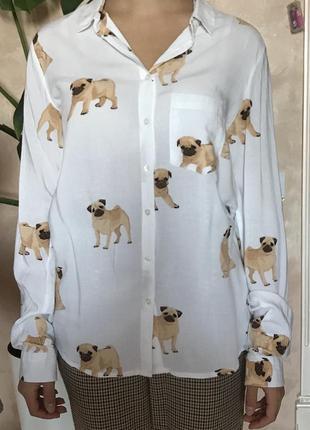 Белая рубашка с мопсами