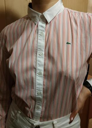 Рубашка lacoste🐊