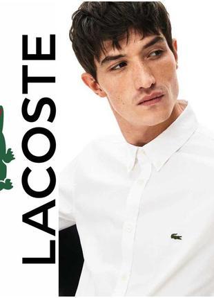 Lacoste. мужская белая классическая рубашка. xl размер.