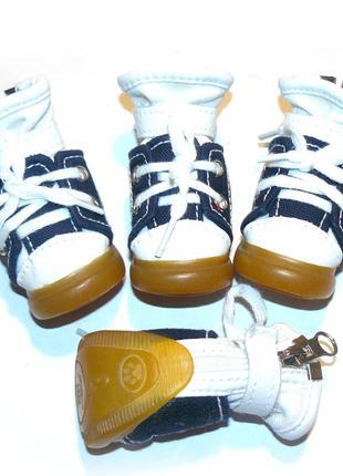 Кеды обувь для собак