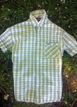 Фирменная рубашка в клетку kickers