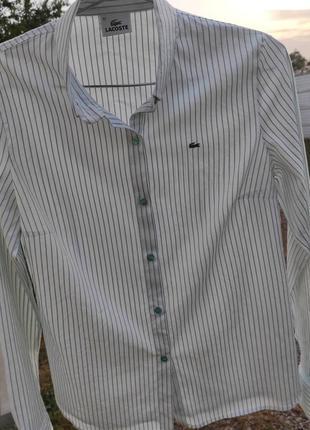Рубашка lacoste 44-46 размер