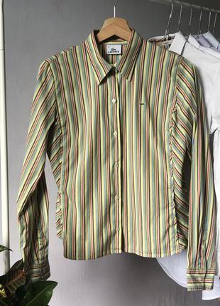 Рубашка в полоску базовая от lacoste