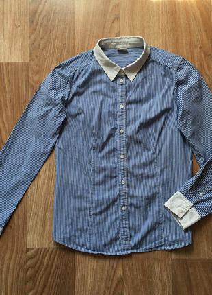 Элитная рубашка в синюю полоску