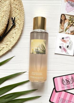 Спрей для тела oasis blooms victoria's secret 15950