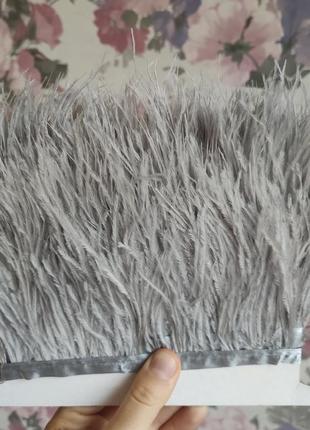 Серые перья страуса на тесьме
