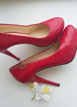 Идеальные туфли от paoletti