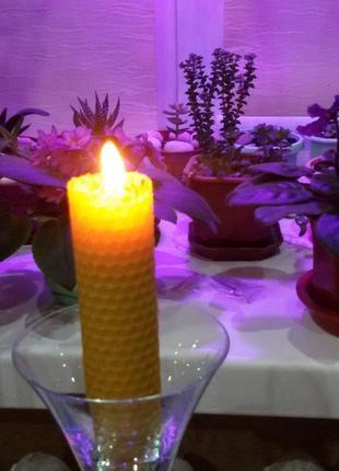 Свечи из натурального пчелиного воска