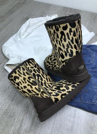 Стильные леопардовые угги ugg